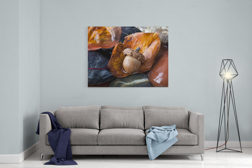 Autumn In Central Park With Acorn On Leaf After Rain Canvas Wall Art Print
