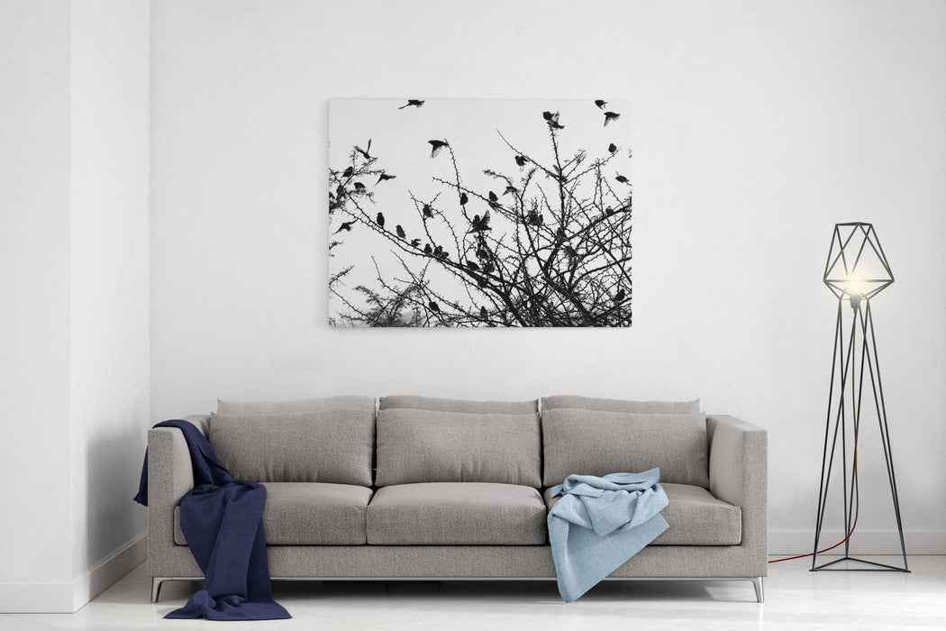 Black And White Simple Minimalist Photo Of A Moment In Nature, Dark Silhouettes Of Small Birds Flying Around A Dry Thorny Bush, Captured In Africa On A Safari Drive Canvas Wall Art Print