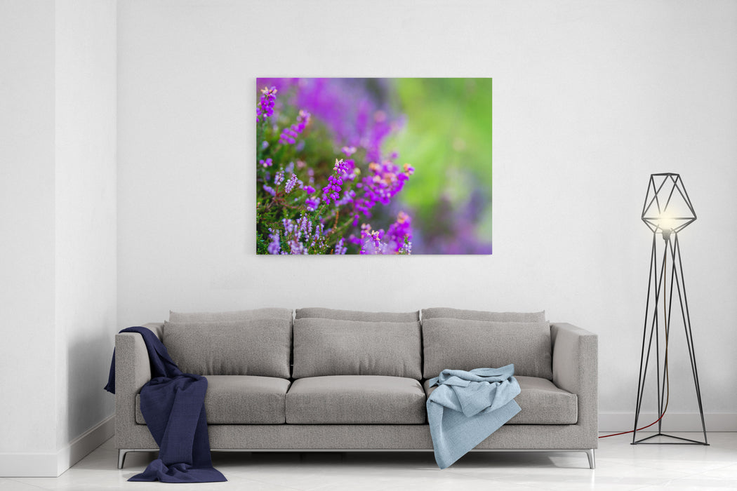 Heather In Moorland Of Highlands Scotland Uk Canvas Wall Art Print