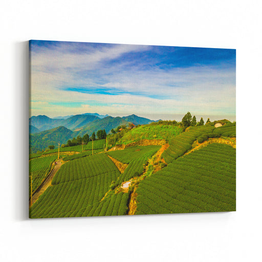 Aerial View Sunrise View Of Tea Plantation Landscape In Taiwan Canvas Wall Art Print