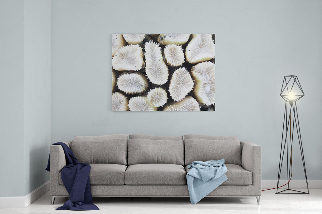 Closeup Of White Coral Canvas Wall Art Print