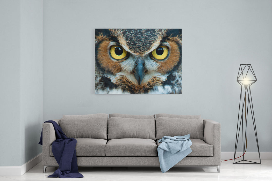 Great Horned Owl Staring With Golden Eyes Canvas Wall Art Print