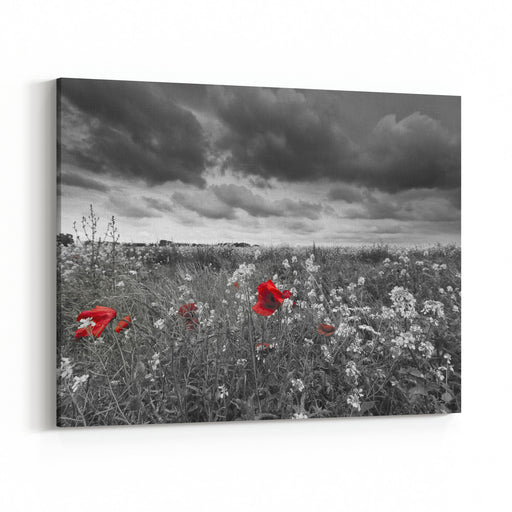Poppies In A Field In Black And White Canvas Wall Art Print