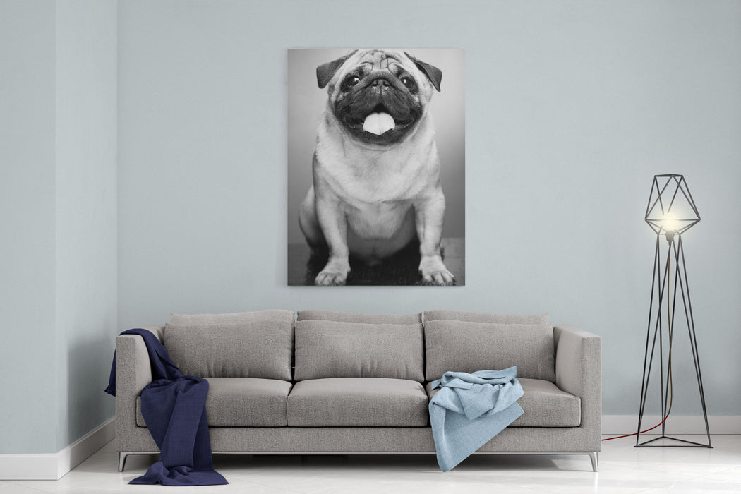 Cute Male Pug On Yellow Background Canvas Wall Art Print