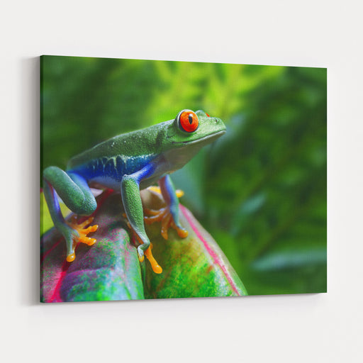 A Colorful RedEyed Tree Frog In Its Tropical Setting Canvas Wall Art Print