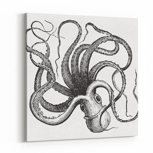 Common Octopus Octopus Vulgaris Isolated On White, Vintage Engraved IllustrationTrousset Encyclopedia Canvas Wall Art Print