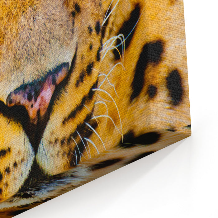 Close Up Portrait Of Leopard With Intense Eyes Canvas Wall Art Print