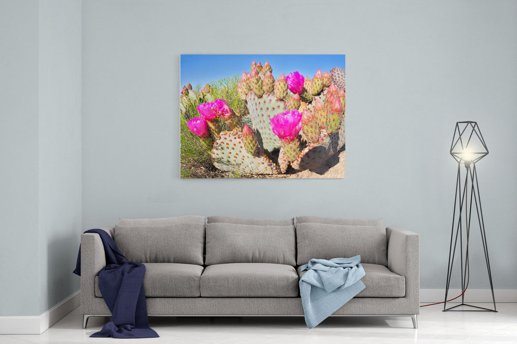Blooming Beavertail Cactus In Mojave Desert Canvas Wall Art Print