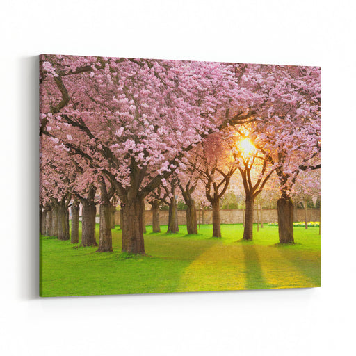 Richly Blossoming Cherry Tree Garden On A Lawn With The Sun Shining Through The Branches Canvas Wall Art Print