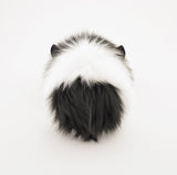 Harley the Black and White Guinea Pig Back View