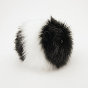 Harley the Black and White Guinea Pig Side View