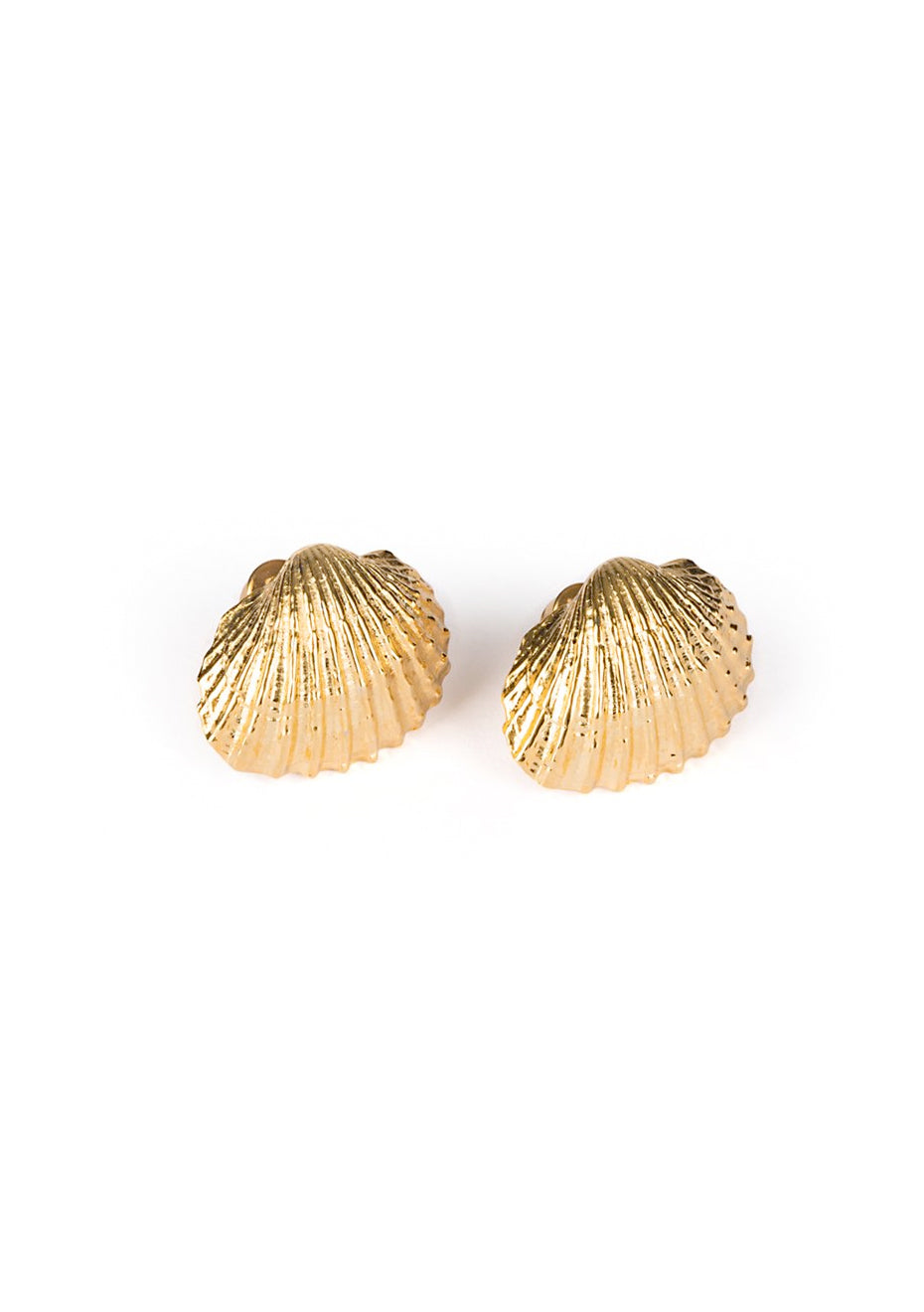 Large Beach Shell Earrings