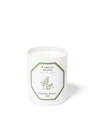 Carriers Freres Tea Plant Candle