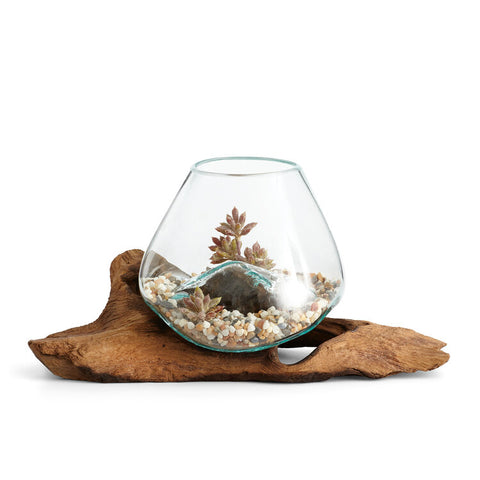 "Our simply beautiful 12"" Long Hand Blown Molten Glass and Teak Wood Root Sculptured Terrarium / Vase / Fish Bowl will delight you with creative ideas on how to decorate it."