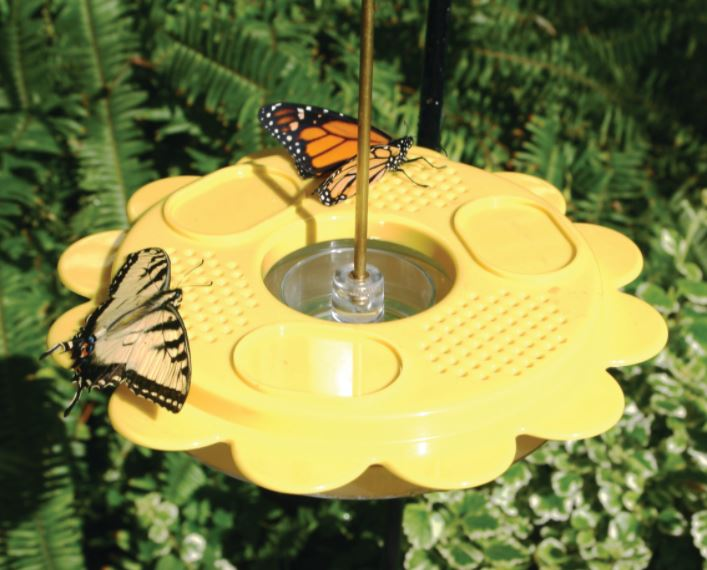 Our Butterfly Fruit and Nectar Feeder with Nectar features a 12 oz. capacity feeder with feeding stations and fruit trays and will allow you to attract a variety of butterflies as well as two 7.50 oz. pouches of nectar. Size is 9