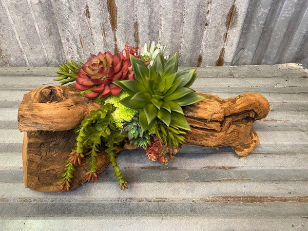 Our Cacti Succulent Log Tabletop Centerpiece Décor features a faux cacti succulent front and center, along with preserved moss and more faux succulents. The arrangement begins with an authentic repurposed log of tumbled grape wood, and then our skilled artisans begin assembling and blending the succulents and their stunning hues of colors from warm tone to cool greens to create a masterpiece that is worth sharing with others. Each piece is unique and approximately 19