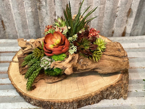 Our Echeveria Succulent Log Tabletop Centerpiece Décor features a variety of mixed succulents and deer moss all nestled in a repurposed log of tumbled grape wood. Each one of our log pieces is handmade by skilled artisans and may have variance in log and design of succulents, but we can assure you that you will love your one-of-a-kind creation. Approximate size is 19