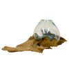 Hand Blown Molten Glass and Long Length Teak Wood Root Sculptured Terrarium  Vase  Fish Bowl
