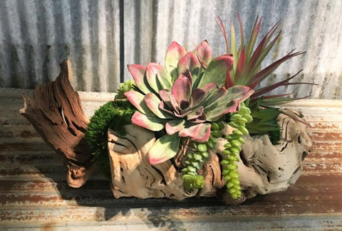 Succulent Blend Log Tabletop Centerpiece Décor features a blend of succulents that have been added to an authentic repurposed log of tumbled grape wood, and then our skilled artisans begin assembling and blending the succulents and moss into a tabletop piece that is unique and beautiful. Each piece is a work of art and each piece of wood may vary in shape and size due to the variations in the wood. Size is be approximately 14