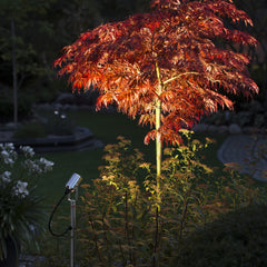 Konstsmide Monza Small Spotlight Illuminating Small Tree