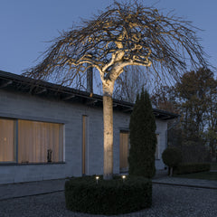 Monza spotlights up lighting large tree