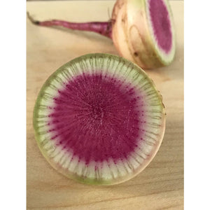 7 Days of a Watermelon Radish by Betsy Marie