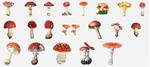 Load image into Gallery viewer, Mushroom Kawaii Planner Stickers
