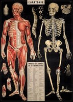 Anatomy poster small