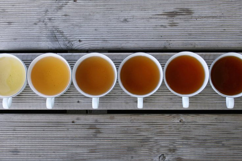 Taste Tea | Tea Tasting Glossary | Stash Tea