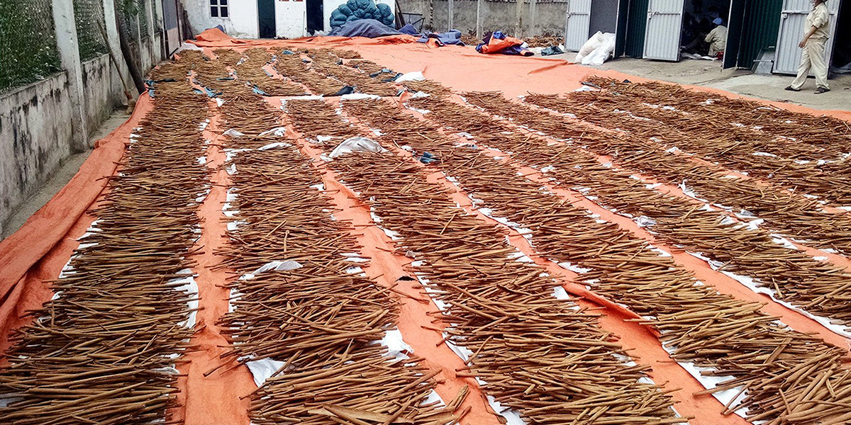 Cinnamon drying | Sourcing Stash | Stash Tea