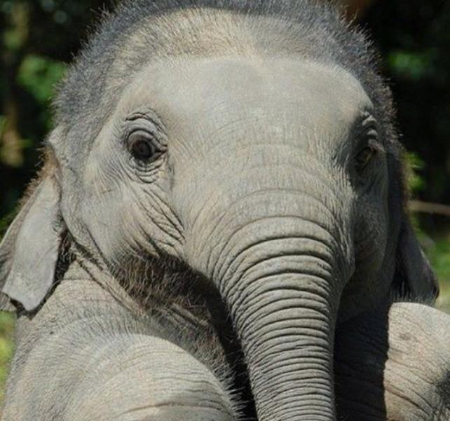 How This Socially Responsible Company Is Saving Elephants & Itself By Replatforming To Shopify Plus