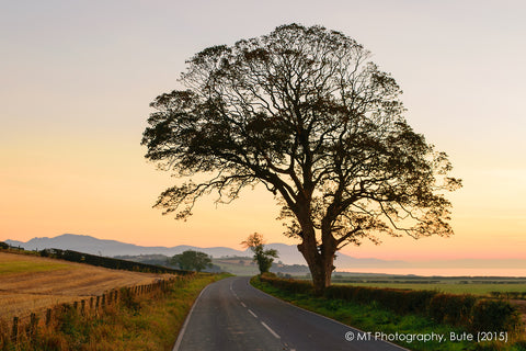 Tree on the A844 to Ettrick Bay