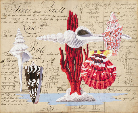 giclee print by Harrison Howard spindle shell with red coral