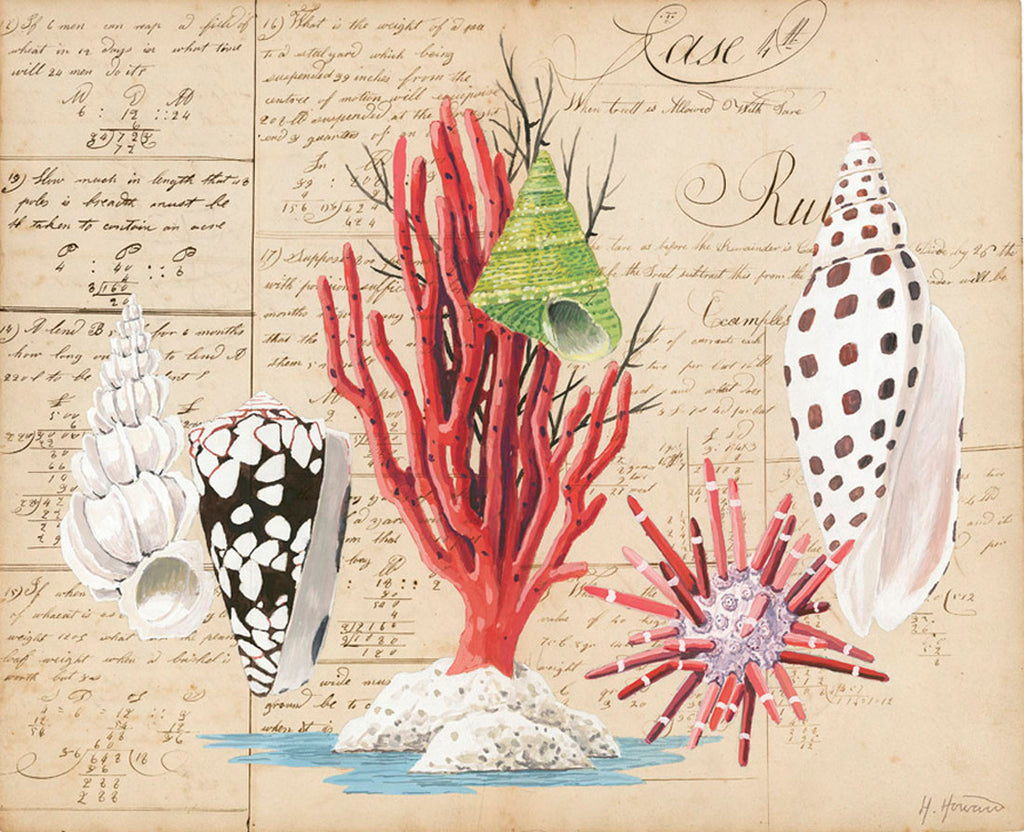 giclee print by Harrison Howard red coral, sea urchin & volute shells on old calligraphy