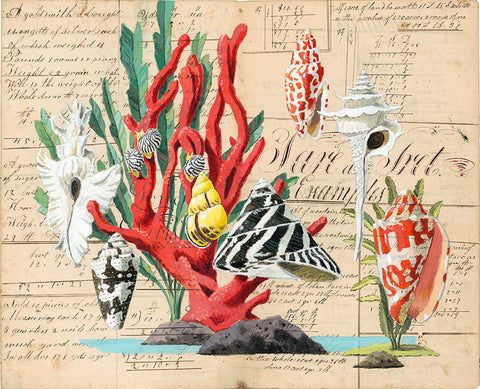 giclee print by Harrison Howard Shells with red coral, top shell, cone shell & volute