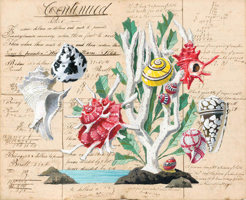 giclee print by Harrison Howard Shells with coral, angaria shell, cone shell on old calligraphy