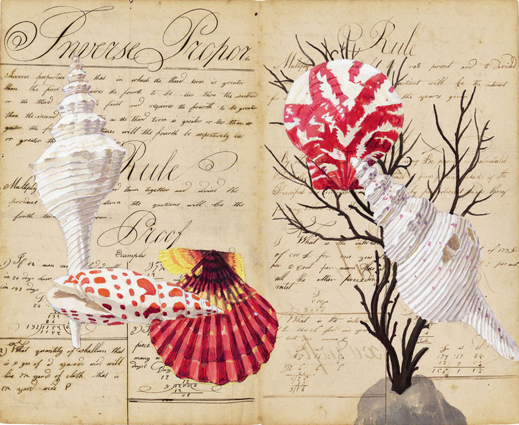 giclee print by Harrison Howard Shells, coral, scallops on old calligraphy