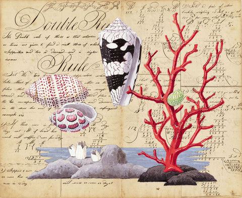 giclee print by Harrison Howard Shells, red coral, bubble shells, cone shelll on old calligraphy