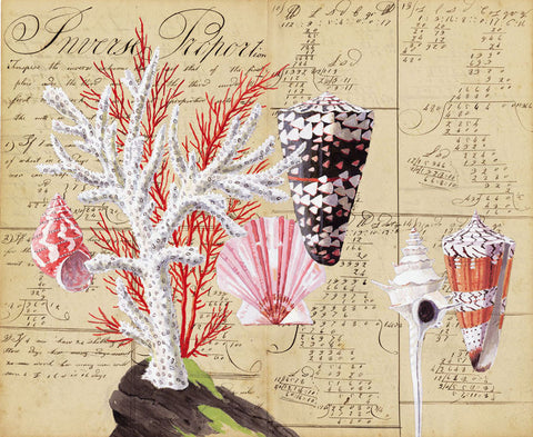 giclee print by Harrison Howard Shells, coral, cone shells, scallop on calligraphy