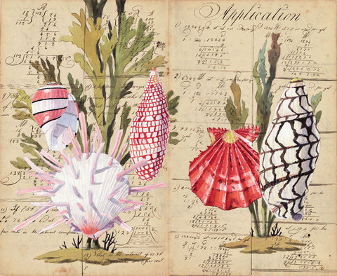 giclee print by Harrison Howard Shells with seaweed, scallop, volute on calligraphy