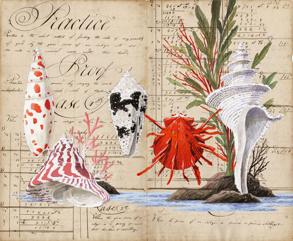 giclee print by Harrison Howard Shells, coral, seaweed, thorny oyster, cone shell on calligraphy