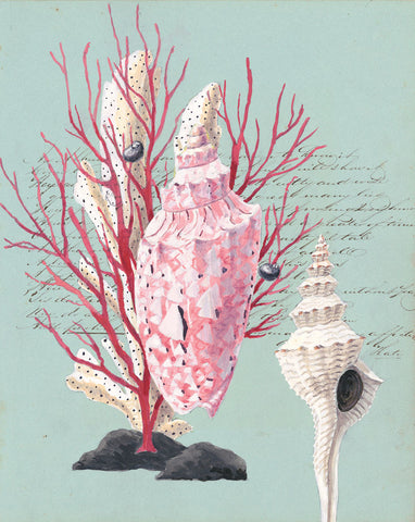 giclee print by Harrison Howard Shells, coral, volute on old calligraphy
