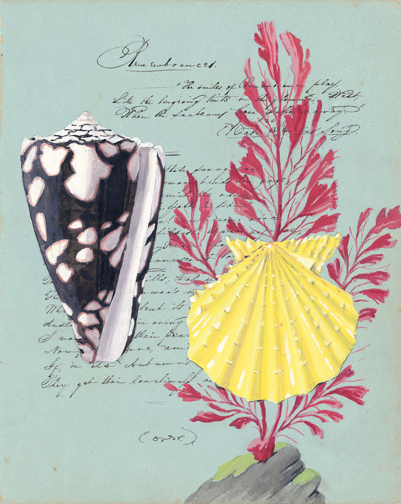 giclee print by Harrison Howard Shells, seaweed,scallop, cone shell on calligraphy