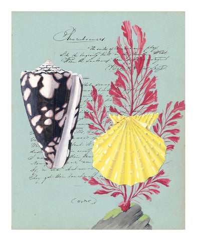 Yellow Pecten with Red Seaweed