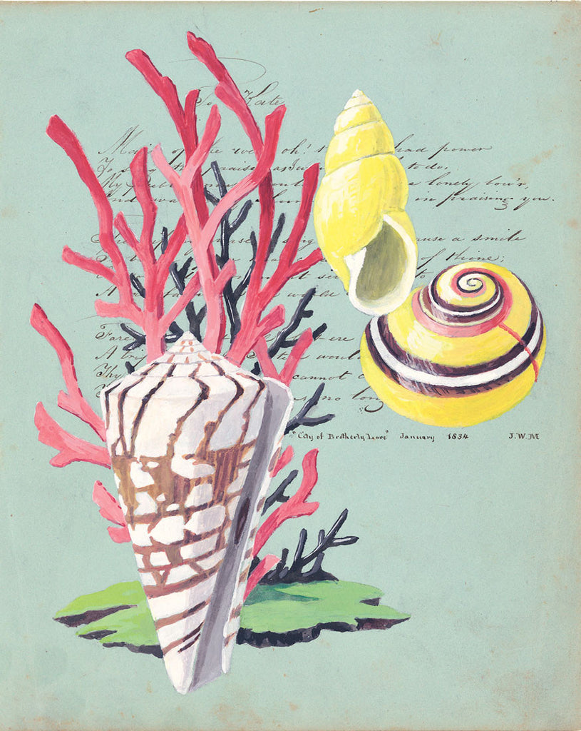 giclee print by Harrison Howard Shells, coral, yellow snails on calligraphy
