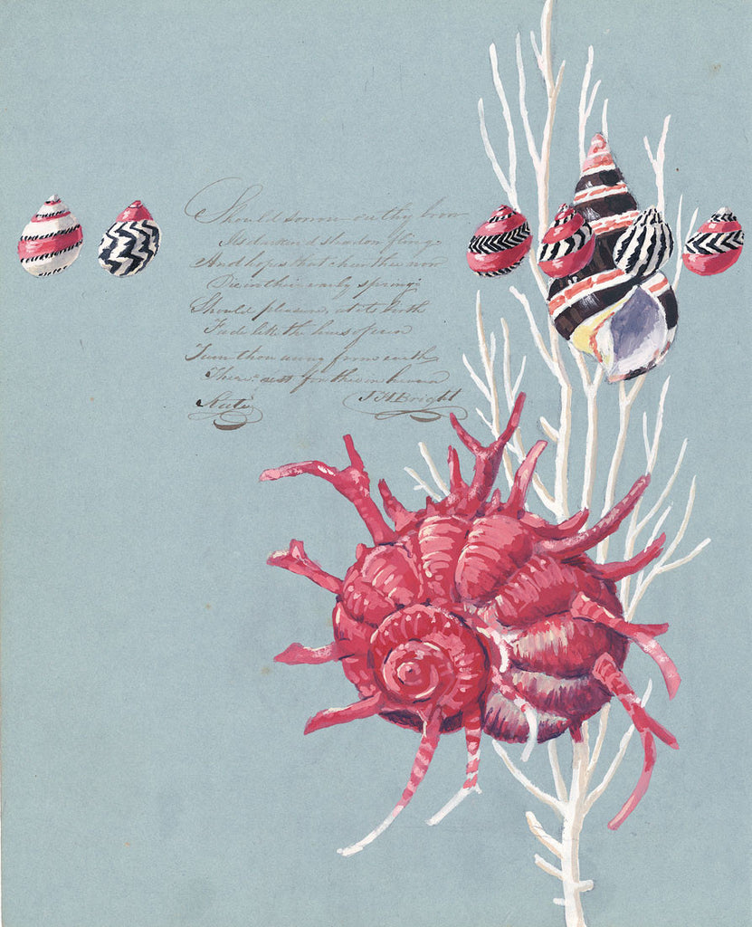 giclee print by Harrison Howard Shells, coral, snails, angaria on calligraphy