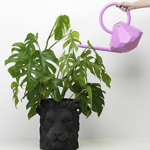 Lion Pot, Terracotta - Coveted Gifts - 3