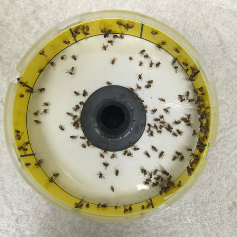 Fruit Fly Trap – Garbage Can Fly Trap