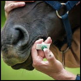 Horse - Treatments
