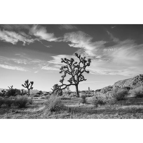 joshua tree black and white print